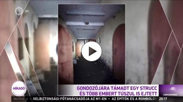 Túszokat ejtett egy strucc Kertvárosban - VIDEÓVAL