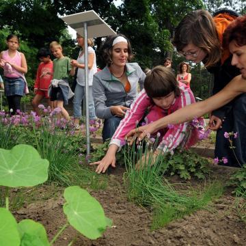 Országos iskolakert-fejlesztési program indul