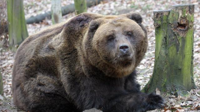 Időjósló medvelest szerveznek a miskolci vadasparkban