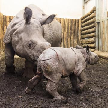 Páncélos orrszarvúakkal készül ünnepelni a 30 éves vadaspark