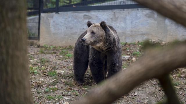 Rekordbevételt ért el tavaly az állatkert