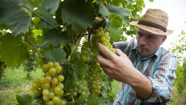 Terv szerint halad a szőlő-bor kutatás-fejlesztési kiválósági központ létrehozása Egerben