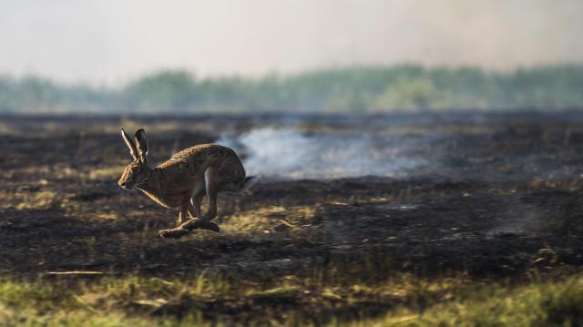 Avartüzek pusztítottak Somogy megye több pontján is