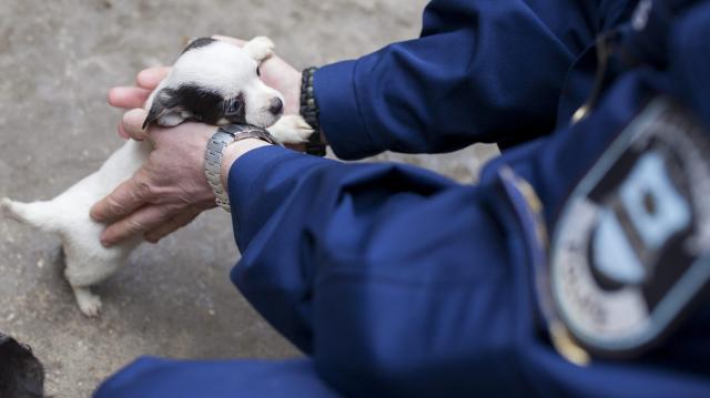 Gyermekek és állatmenhelyek kapják a legtöbb szja-felajánlást