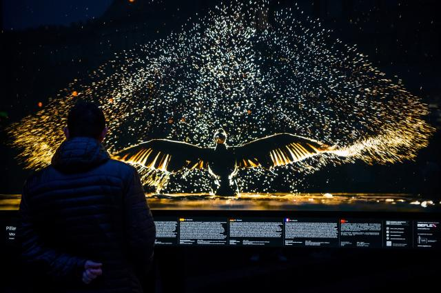 Máté Bence természetfotóiból nyílt szabadtéri vándorkiállítás