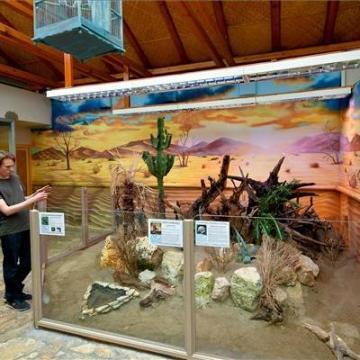 Szavannaterrárium és galléros gyík a debreceni állatkertben