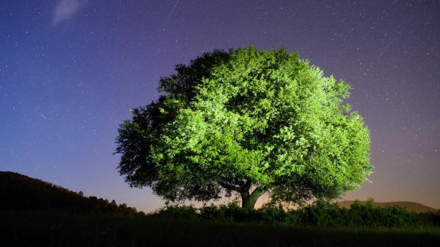 Faölelésre hívnak az Erdők Világnapján