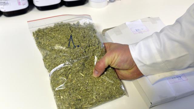 Két kilogramm marihuánát találtak egy macedón buszban Röszkén