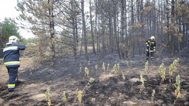 Nébih: országos tűzgyújtási tilalom lépett életbe pénteken