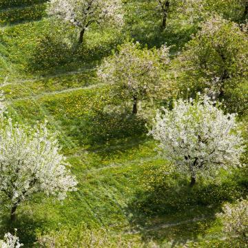 Sikeres a Kisalföldi Erdőgazdaság gyümölcsoltási programja