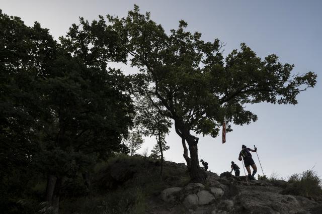 Folytatódik a veszélyeztetett növényfajok fennmaradását biztosító program a Pilisben