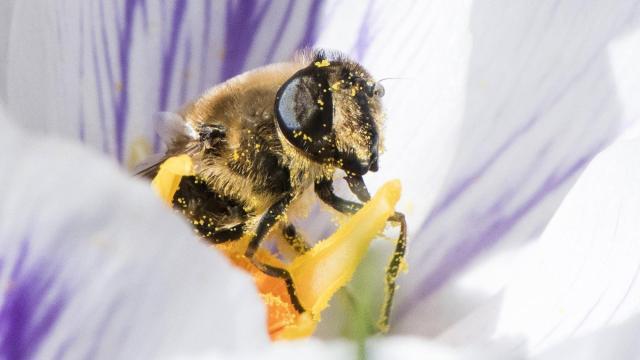 Idén is felmérik a méhpusztulások kockázatát