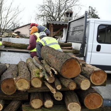 Kiemelten  ellenőrzi az erdei faválasztékot szállítókat a Nébih
