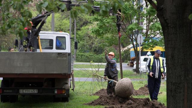 Nagyszabású faültetési program indul Debrecenben