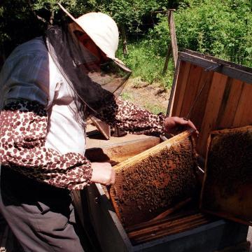 A kormány idén 600 millió forintot biztosít a méhészek támogatására