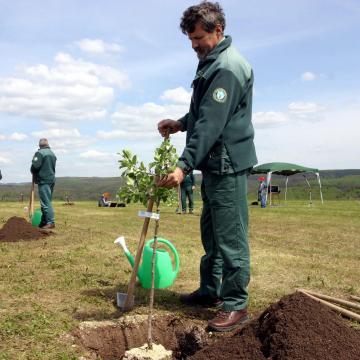 Egymillió facsemetét ültetett az Ipoly Erdő Zrt.