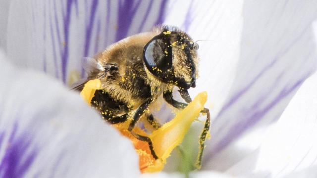 Folytatják a nyári méhpusztulás okainak vizsgálatát