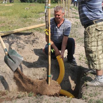Hatezer fát ültetnek el Kaposváron a következő években