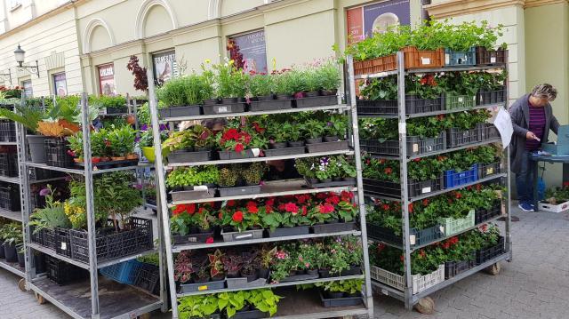 Most érdemes virágot venni Kaposváron