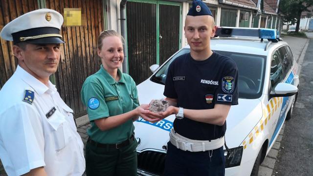 Rendőrök segítségével került biztonságba egy kisbagoly