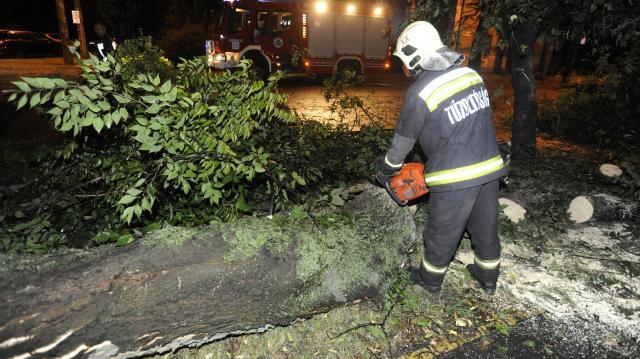Az erős szélben kidőlt fák okoznak gondot Zalában
