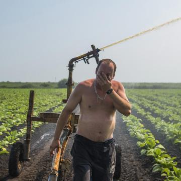 Díjmentesen elérhető aszályelőrejelző-hálózat segíti a gazdák munkáját májustól
