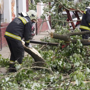 Fák dőltek ki a viharos szélben országszerte