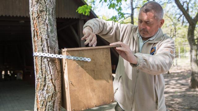 Hétszáz madárodút helyeztek ki az állami erdőkbe