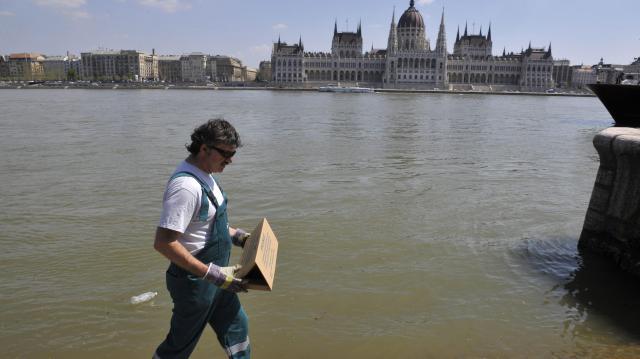 Indul a célzott, intenzív többletpatkányirtás Budapesten