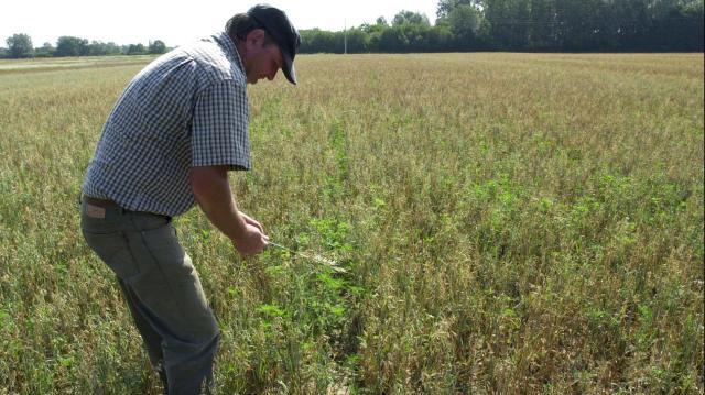 NAK: díjmentesen elérhető aszályelőrejelző-hálózat segíti a gazdák munkáját májustól