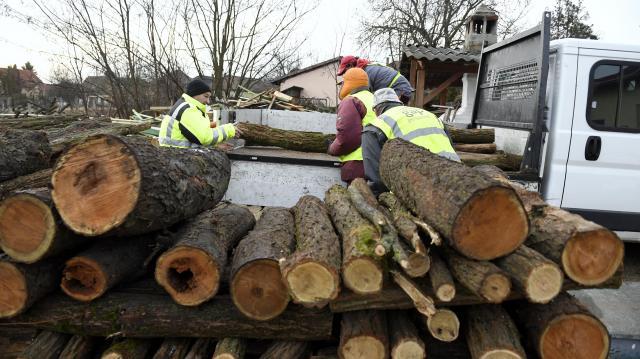 Egyre hatékonyabb az illegális fakitermelés és kereskedelem elleni küzdelem