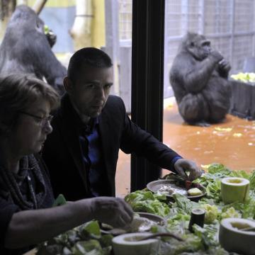 Gorillareggelivel kampányolt a mobiltelefonok újrahasznosításáért a fővárosi állatkert alapítványa
