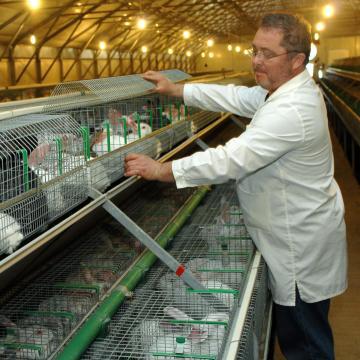 Kampány indul a nyúlhús fogyasztásának népszerűsítéséért
