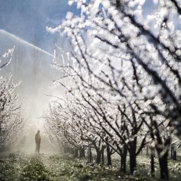 A sok eső miatt különösen oda kell figyelni a zöldségek és a gyümölcsösök növényvédelmére