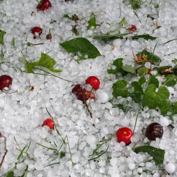 A sok eső miatt oda kell figyelni a növényvédelemre