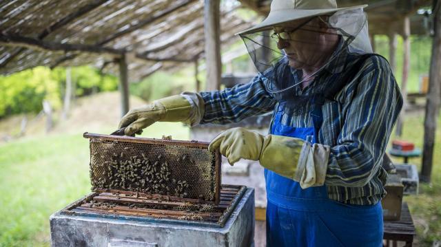 A hőség a méhészeteknek sem kedvez