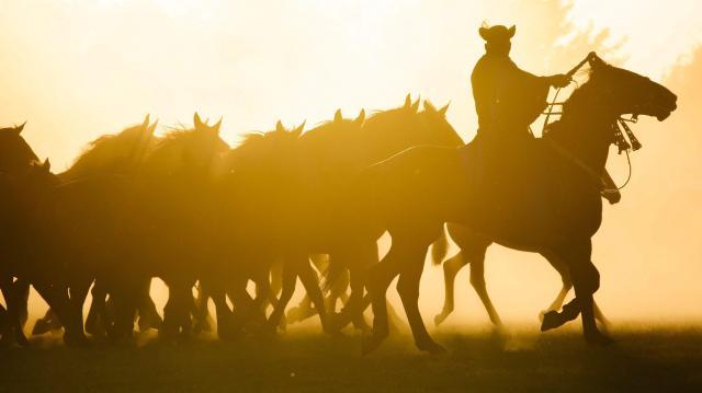 Húszezer látogatót várnak a hortobágyi lovasnapokra