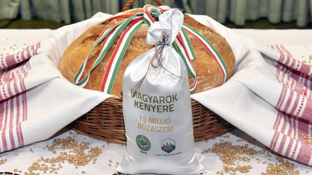 Elkezdődött a Magyarok Kenyere - 15 millió búzaszem program