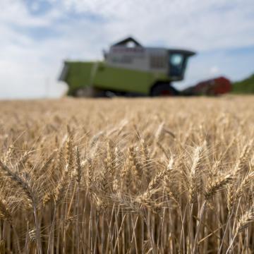 Exportra is bőven jut a magyar gabonából az idén