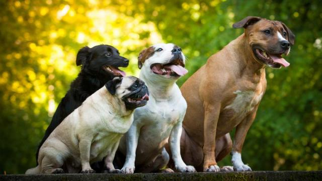 Rengeteg a felelőtlen kutyatartó