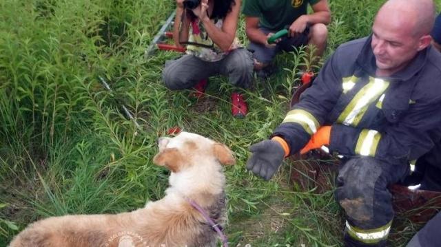 Tűzoltóknak köszönheti az életét egy kutyát