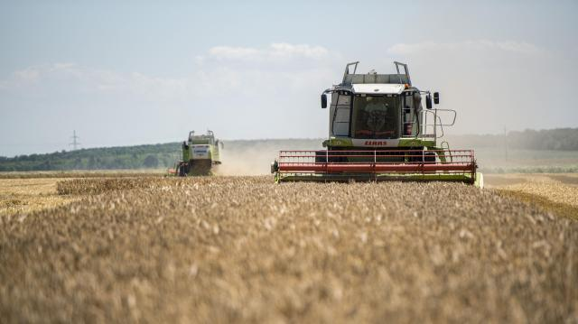Végéhez közeledik az őszi árpa betakarítása, a termés több lesz a tavalyinál