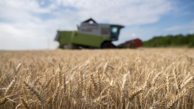 Kedvezőbb termésátlagokra számítanak a megyében az idén