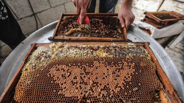 Csökken a méhészek száma