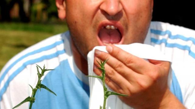 Már okozhat allergiás tüneteket  a pollenszórás helyenként