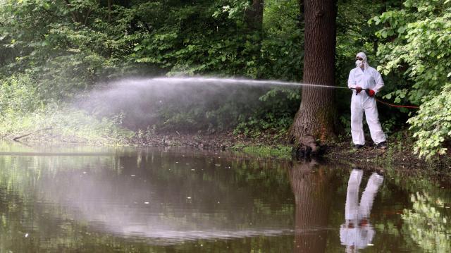 A héten több régióban is gyérítik a szúnyogokat