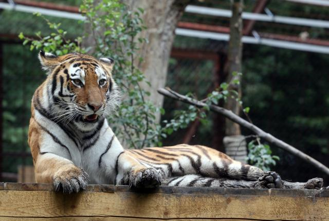 Állatkertek éjszakája augusztus 30-án tizenhárom helyszínen