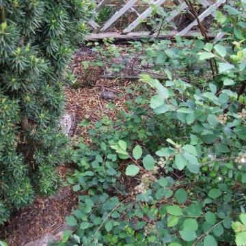 Kivágta a szomszéd fáit, mert takarta a kilátást, vádat emelnek ellene