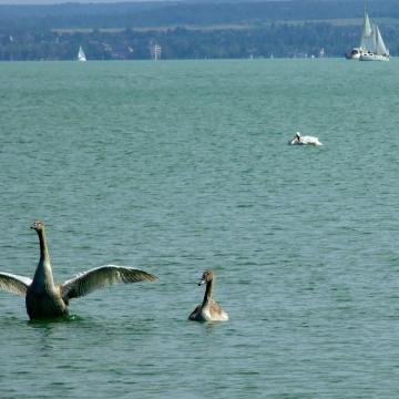 Kiváló a nagy tavak vízminősége itthon