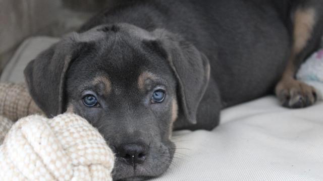 Kutyatartók figyelem! - Óvintézkedések az augusztus 20-i tűzijáték idejére